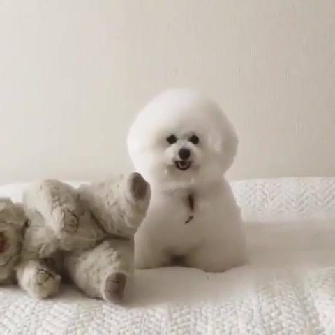 Cachorrinho Mais Fofinho!