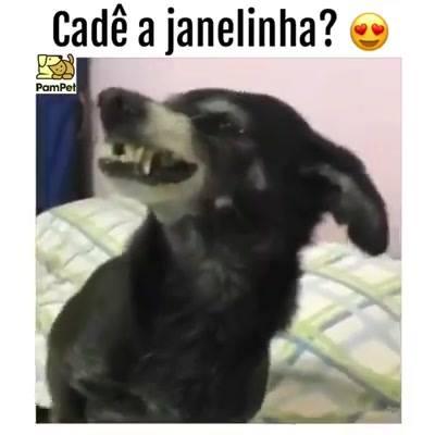 Cachorrinho Com Janelinha