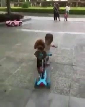 Cachorrinho Com Patinete