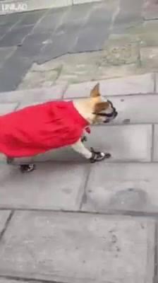 Cachorrinho De Patins