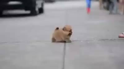 Cachorrinho Pequeno, Fofo!