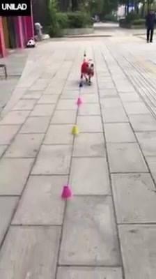 Cachorrinho Sabe Andar De Patins, Olha Só Como Ele É Todo Estiloso!!!