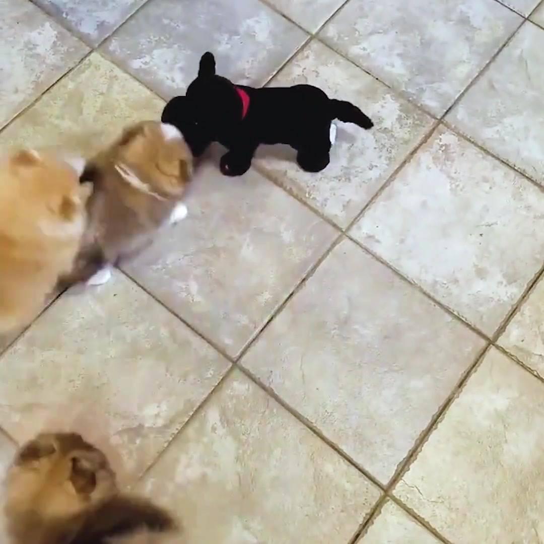 Cachorrinhos Ganham Amiguinho De Mentira, Veja Como Foi A Reação!