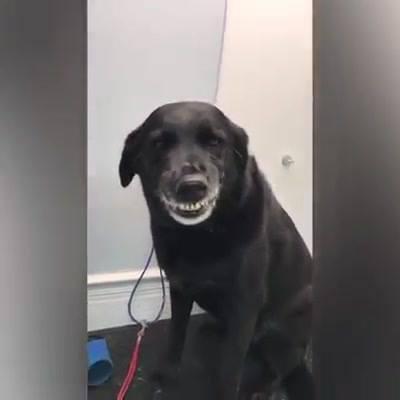 Cachorrinhos Que Sabem Sorrir, Olha Só Estas Carinhas Fofas!!!