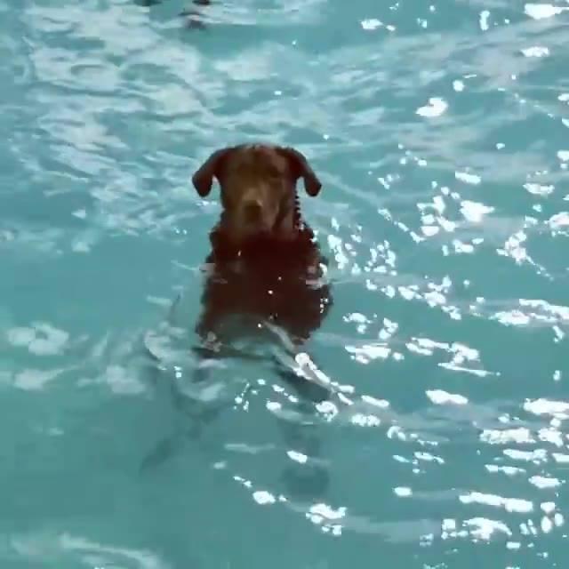 Cachorro Adora Ficar Na Piscina, Olha Só Como Ele Fica Só Curtindo!!!