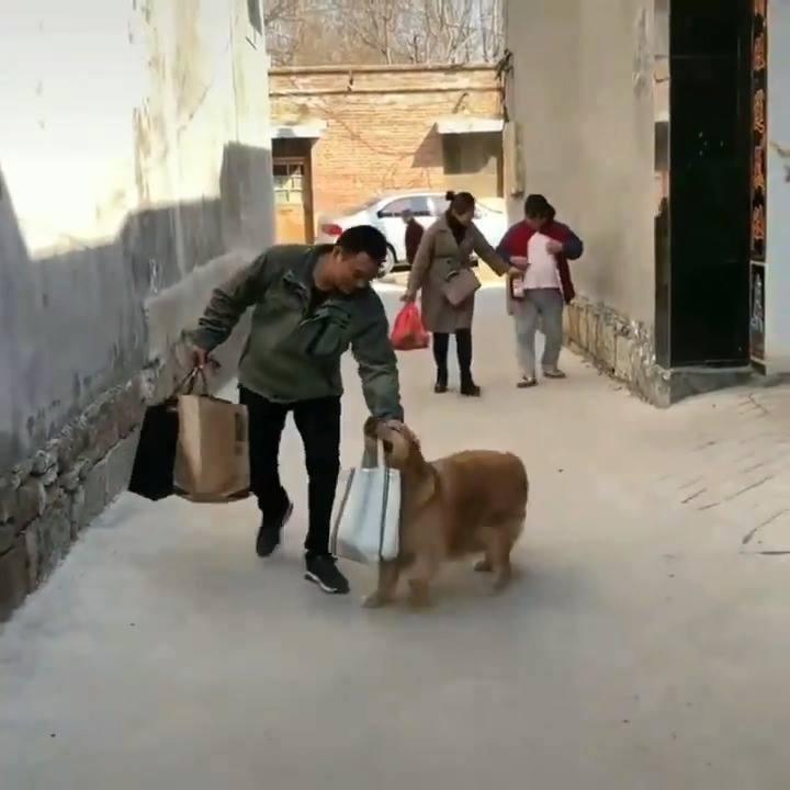 Cachorro Ajudando A Carregar Sacolas, Olha Só Que Amiguinho Prestativo!!!