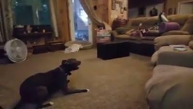 Cachorro Brincando Com As Crianças, Olha Só Que Divertido!!!