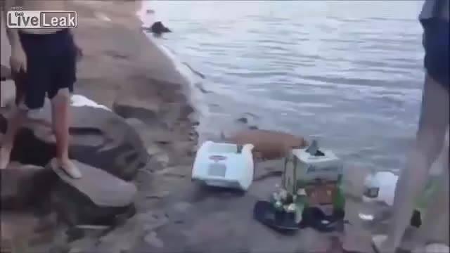 Cachorro Chora Vai Atrás De Dono Que Caiu Na Água, Que Lindo!