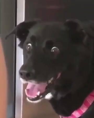 Cachorro Engraçadinho