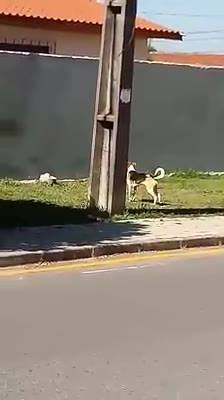 Cachorro Fica Preso Fora De Casa, E Faz Várias Tentativas Até Pular O Muro!!!