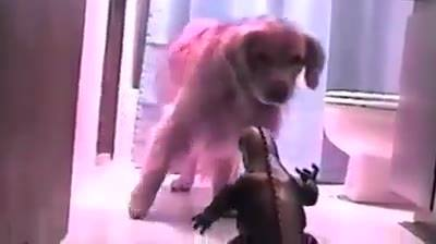 Cachorro E O Godzilla