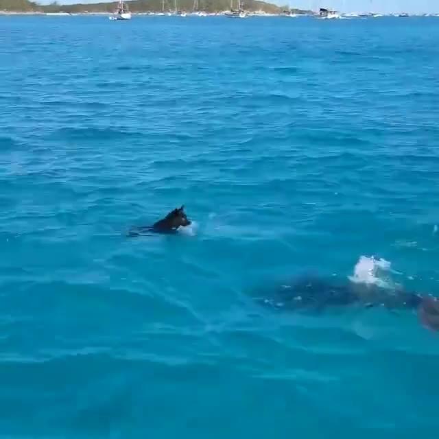 Cachorro E Golfinho Brincando Em Auto Mar, Que Imagens Incríveis!!!