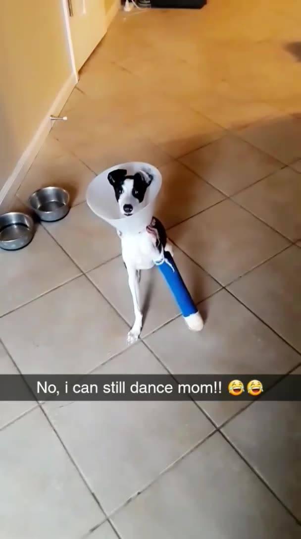 Cachorro Com Pata Enfaixada E Cone Da Vergonha E Mesmo Assim Dançando!