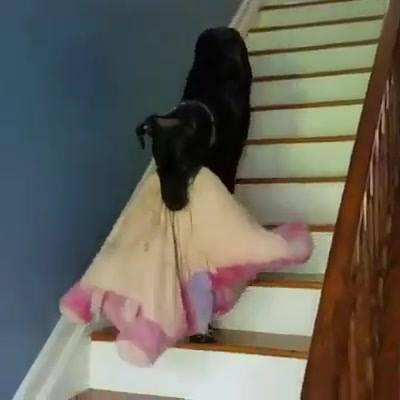 Cachorro Pega Sua Caminha Leva Pra Cima Do Sofá E Deita, Que Lindo!!!