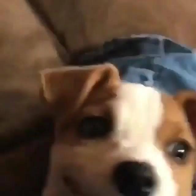 Cachorro Sorrindo, Esse É O Melhor Sorriso Do Dia, Confira!