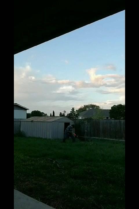 Cachorro Treinado Para Pegar No Braço De Bandido, Esse É Um Bom Cão De Guarda!