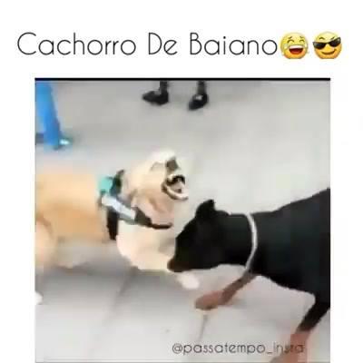 Cachorros E A Capoeira, Quem Será Que Ensinou Isso A Eles?