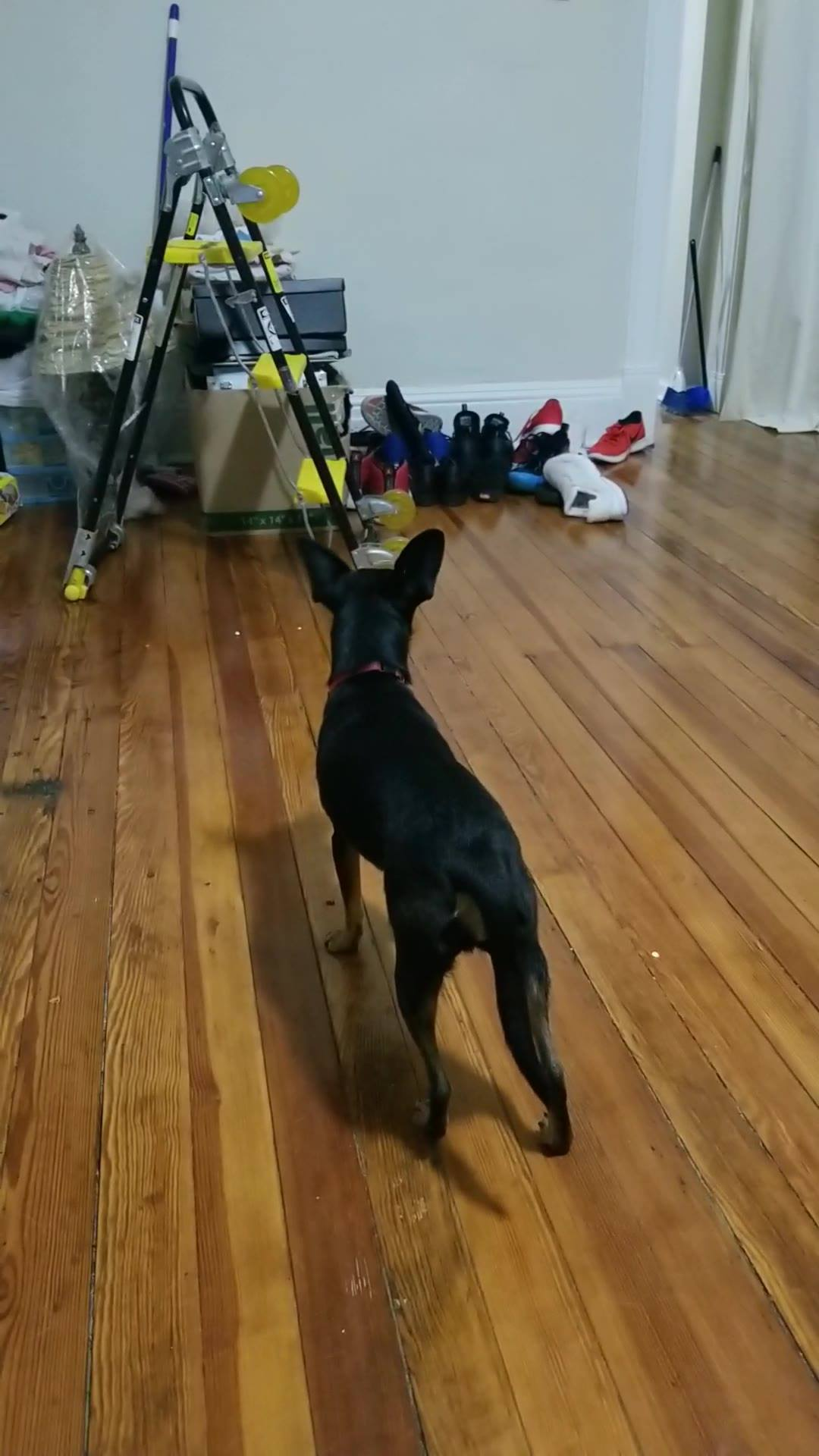 Cachorros Se Comunicando A Distância, Veja Como Eles Fazem Isso!