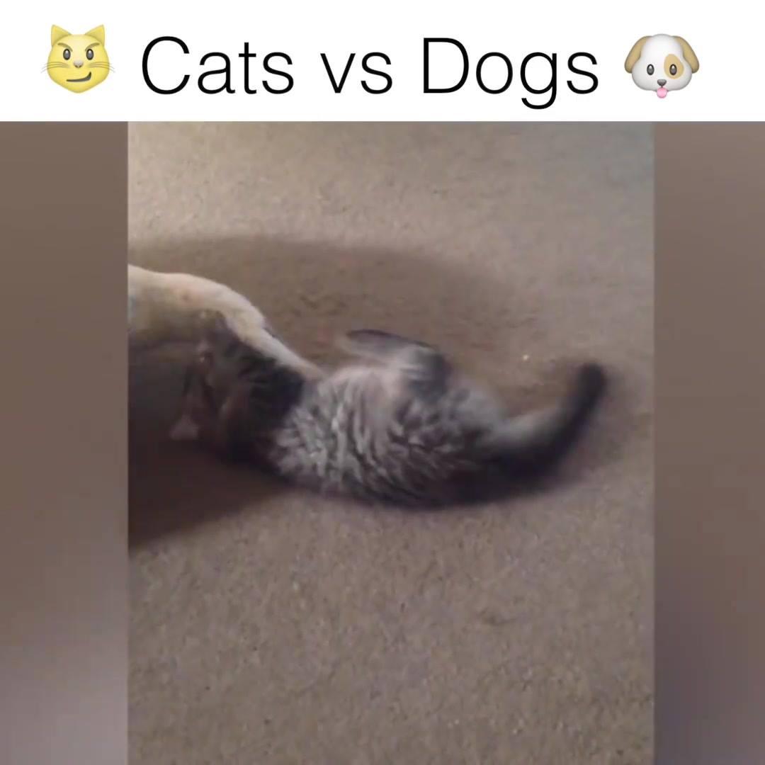 Cachorros Versus Gatos, Uma Guerra Que Jamais Vai Ter Fim, Hahaha!!!