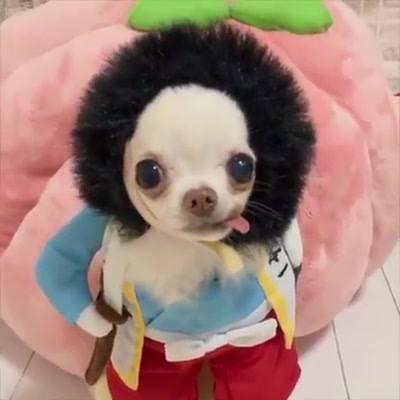 Caminha De Cão Para O Frio