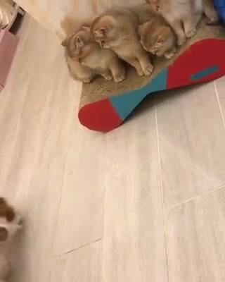 Cão Quer Brincar Com Gatos