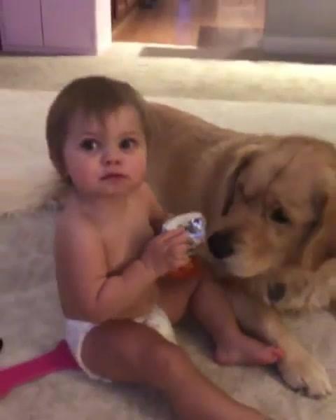 Criança Dando Comida Para O Cachorro... Só Que Não Hahaha!