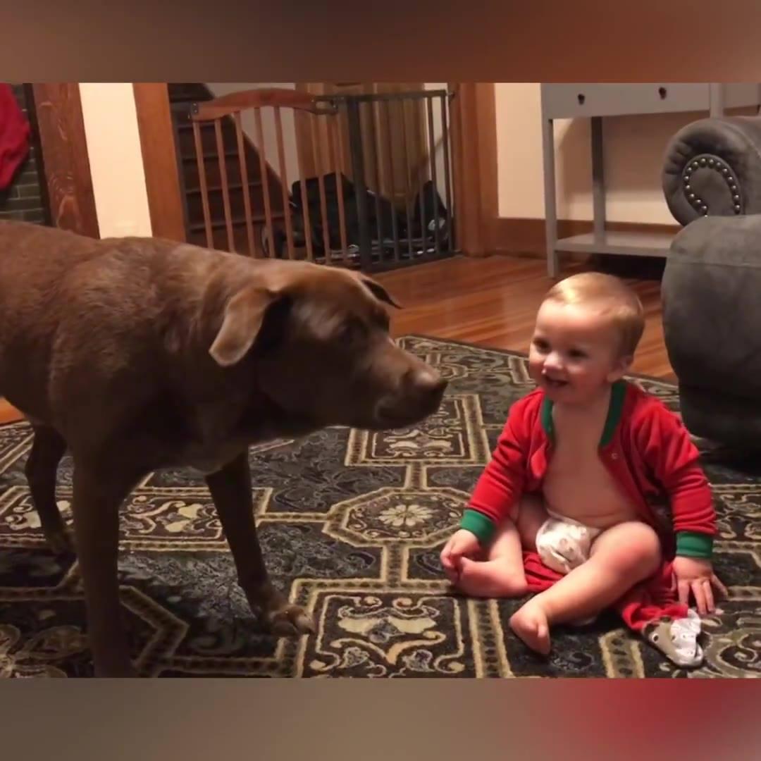 Crianças Brincando E Se Divertindo Com Seus Melhores Amigos, Os Cachorros!