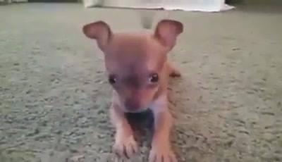 Cuidado, Cão Super Bravo!