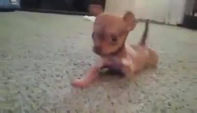Cuidado, Cão Super Bravo No Video, Aperte O Play Com Cuidado!