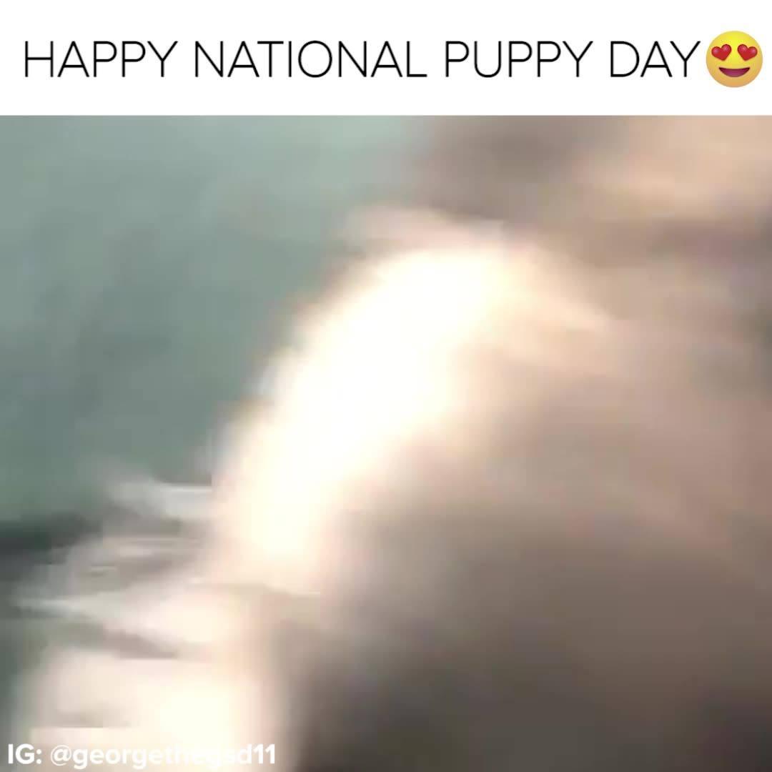 Dia Do Cachorro Feliz É Dia 23 De Março, Eles São Muito Fofos!