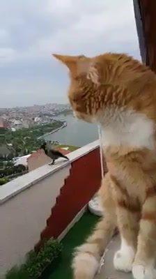 Discussão Entre Um Gato E Um Pássaro, Essa É A Melhor Discussão Do Dia!
