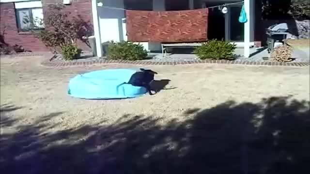 Cachorro Fazendo Bagunça Com Uma Piscina Velha, Para Rir Junto Com Eles!
