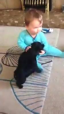 Bebê Brincando Com Cães