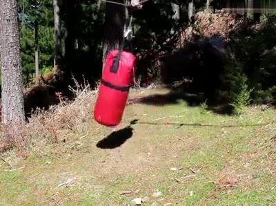 Boque Lutando Boxe, Olha Só Que Engraçado E Assustador Ao Mesmo Tempo!!!