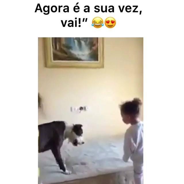 Cachorrinho Brincando De Pular Em Cima Da Cama Com Suas Amiguinhas!!!