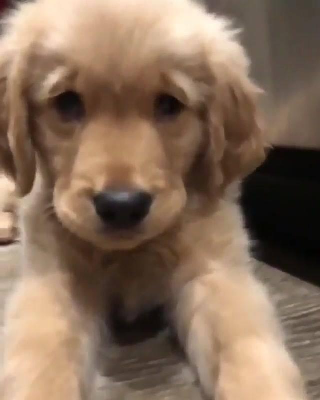 Cachorrinho Fofo Para Desejar Boa Tarde A Todos, Que Fofura!