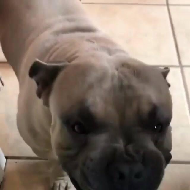 Cachorrinho Não Sabe Se Fica Bravo, Ou Alegra, Olha Só Que Engraçadinho!!!