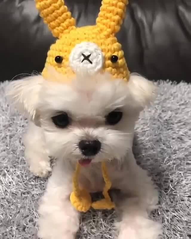 Cachorrinho Com Touca De Bichinho, Ele Ficou Uma Fofura!