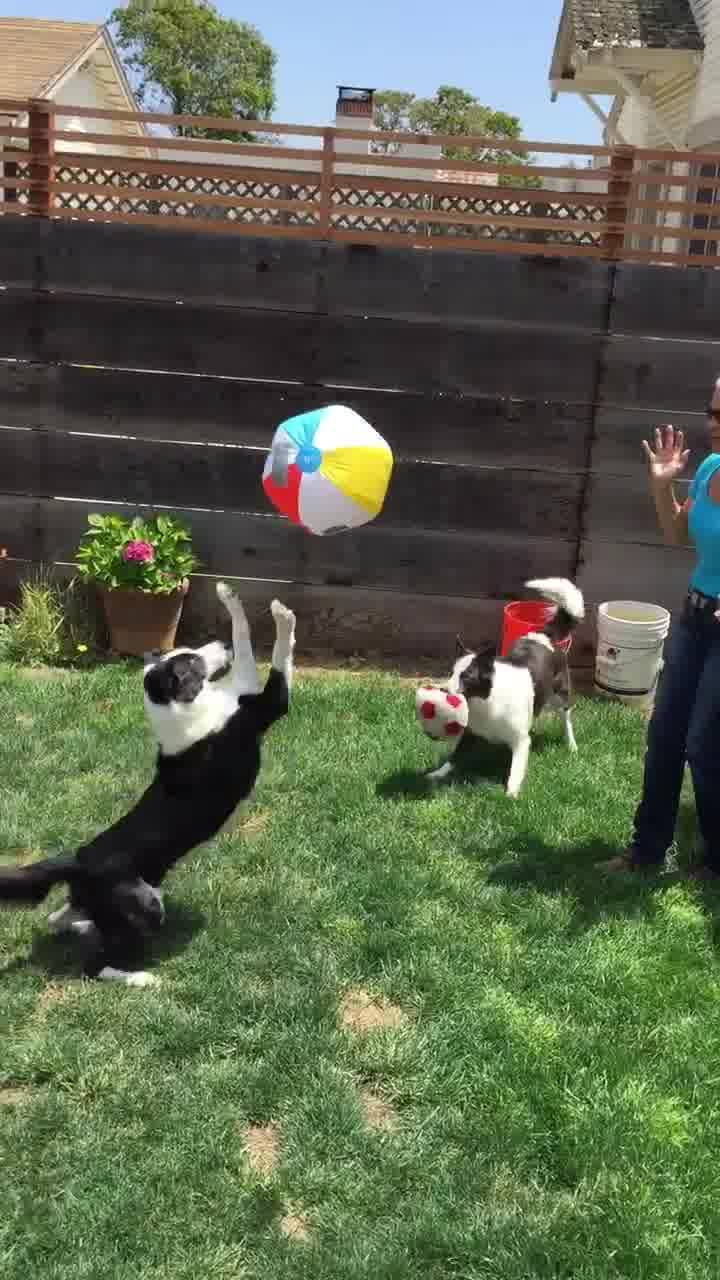 Cachorrinhos Brincando De Bola Com A Mamãe, Olha Só Como Eles Adoram!