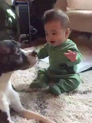 Cachorro Fazendo Festa