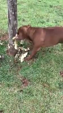Cachorro Mordendo Árvore