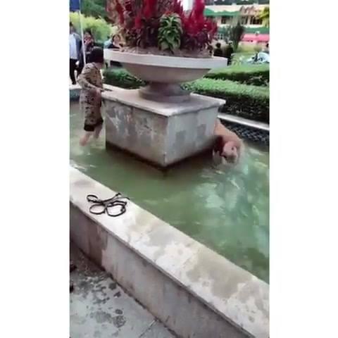 Cachorro Da Raça Golden Retriever Fazendo As Artes Que Eles Adoram!