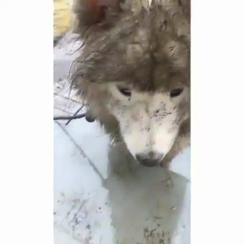 Cão Faz Buraco Enorme