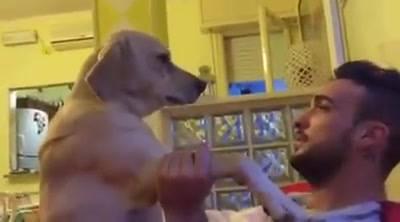Cão Pedindo Desculpas
