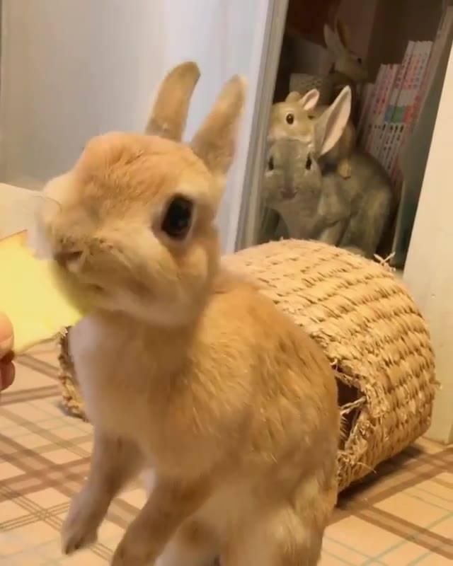 Coelhinho Comendo Maçã, Olha Só Que Coisinha Mais Linda De Animal!!!