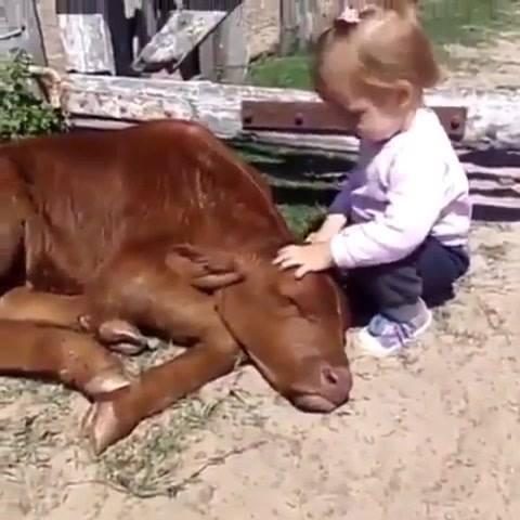 Criança E Animais, Uma Amizade Que Nos Fazer Ter Esperança Em Um Mundo Melhor!