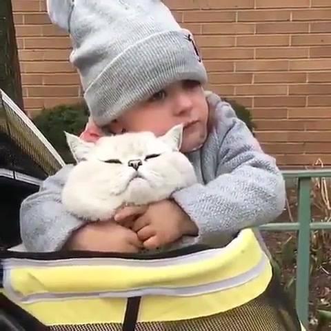 Criança Dando Abraço Carinho Para Seu Gato, Que Cena Mais Linda!