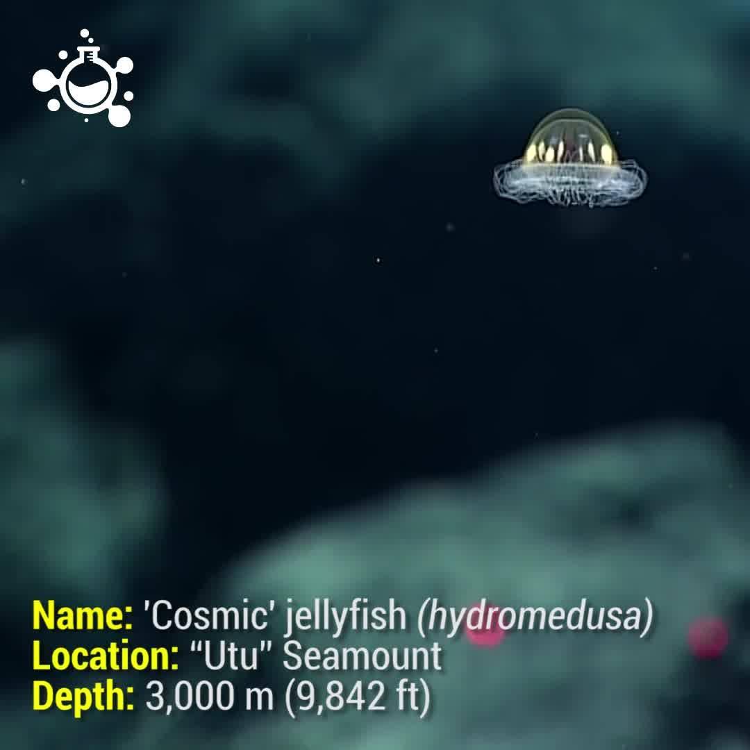 Criaturas Marinhas Impressionantes, Parecem Ter Saído De Um Filme De Ficção!!!