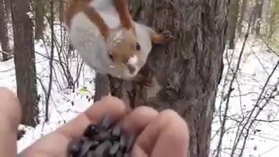 Esquilos Pegando Comida