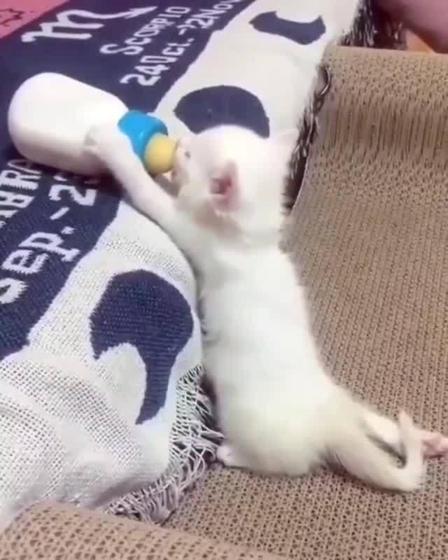 Filhotinho De Gato Mamando Na Mamadeira, Olha Só Que Lindinho!!!